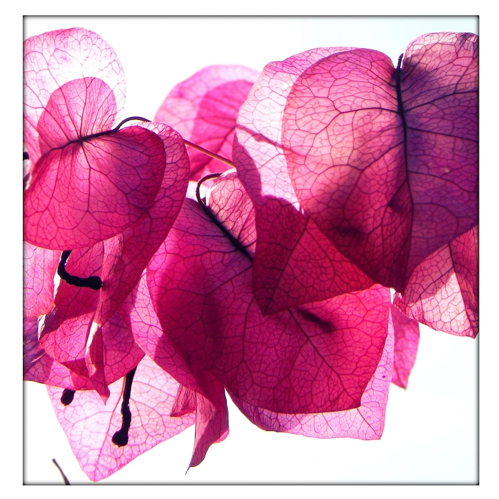 Katherine Minnott: Petal Ballet